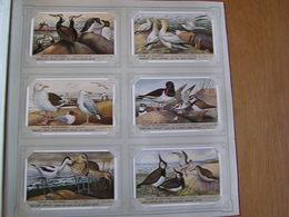 STRAND EN DIJNVOGELS Oiseaux Des Dunes Birds Liebig Série Reeks 6 Chromos Nederlandse Taal Trading Cards Chromo - Liebig