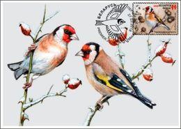 Belarus 2018 MC Maximum Card Bird Of The Year Black-headed Goldfinch Le Chardonneret Bird Birds Oiseau Oiseaux - Other