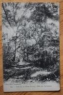 83 : Forêt De La Sainte-Baume - Allée (Allés) Des Belladones - (n°12675) - France