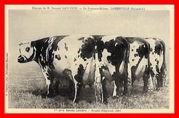 CPA  (76) DOUDEVILLE.  Le Bosc-aux-Moines. Elevage De M. Bernard Lavoinne. 1er Prix Bande Laitière Rouen 1937...E661 - Allevamenti