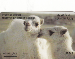 Kuwait Phonecard - Camel -  Superb Used - Kuwait