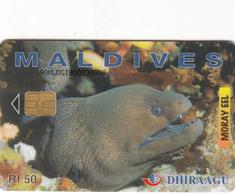 Maldives Phonecard - Moray Eel -  Superb Used - Maldives