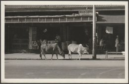 Street Cows, Bombay, India, C.1940s - Photograph - Places
