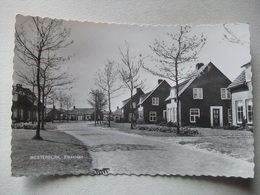 M50 Ansichtkaart Westerbork - Eikenlaan - 1962 - Pays-Bas