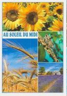 Fleurs   H33         ( 4 Vues ) Tournesols, Champ De Blé, Cigale,lavande Et Borie - Fleurs