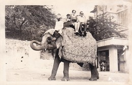RIDE AT ELEPHANT. NEPAL.-BLEUP - Nepal