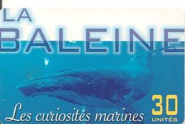 CARTE-PUCE-POLYNESIE-30U-PF119-GEMA-Fond Rouge-10/01-LA BALEINE -UTILISE-TBE-LUXE- - French Polynesia