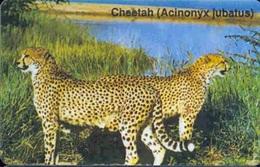 Namibia - Namibia's Big Cats, Animal, Cheetah - Acinonyx Jubatus (NAEI - Dashed Zero), Used - Namibia