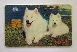Indonesie Telefoonkaart - Telkom Indonesia (White Dogs Samoyed) 100 Unit (Used) - Indonesië