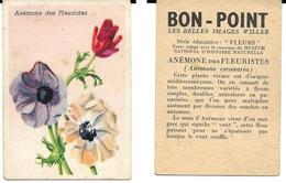 Image Bon-point, Série Fleurs, Anémone Des Fleuristes - B. Plantes Fleuries & Fleurs