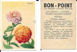 Image Bon-point, Série Fleurs, Zinnia - B. Plantes Fleuries & Fleurs