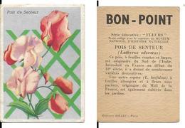 Image Bon-point, Série Fleurs, Pois De Senteur - B. Plantes Fleuries & Fleurs