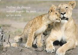 Animaux - Lions - La Mère Et Son Petit -Profiter De Chaque Instant Auprès De Ceux Qu'on Aime - Cpm- Pas écrite - - Lions