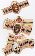24 Cigar Bands Hudson Wild Animals - Bagues De Cigares