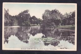 SP3-80 TYERSALL LAKE IN THE BOTANICAL GARDEN - Singapore