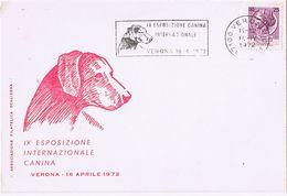 IX Esposizione Internazionale Canina - Verona 1972 - Dogs