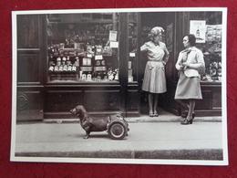 CPM ROBERT DOISNEAU DOG ON WHEELS CHIEN A ROUES 1977 - Doisneau