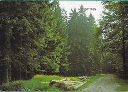 ! - Belgique - Neeroeteren (Maaseik) - Chemin En Forêt - Maaseik