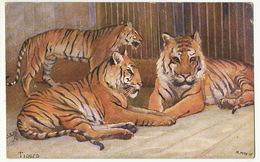 Tigers Tigres  Signée M. Mac N.W. Tuck Oilette  9054 - Tigres