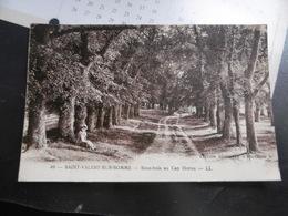 D 80 - Saint Valery Sur Somme - Sous Bois Au Cap Hornu - Saint Valery Sur Somme