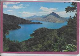 SCHEWELL SAVILL BAY FRENCH PASS - Nuova Zelanda