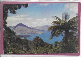 SHEWELL 2.550 FT MARLBOROUGH SOUNDS - Nuova Zelanda