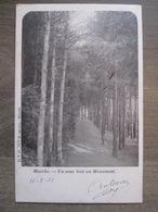 Cpa Marche En Famenne - Un Sous Bois Au Monument - D.V.D. 7673 Severin Marche - 1902 - Marche-en-Famenne