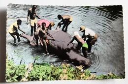 CPSM Chase à L'hippopotame Afrique Africolor N°800 - Hippopotames