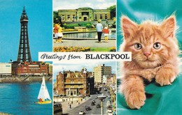 Postcard Greetings From Blackpool The Tower Stanley Park Princess Parade & Cat By Bamforth My Ref  B12149 - Blackpool