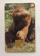 Indonesie Telefoonkaart - Telkom Indonesia (Sumatra Brown Bear) Beruang Sumatra 100 Unit (Used) - Indonesia