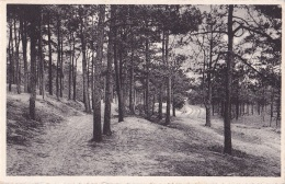 KASTERLEE : Boschweg - België