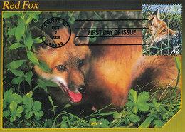 D33641 CARTE MAXIMUM CARD FD 2008 USA - RED FOX FUCHS RENARD CP ORIGINAL - Timbres