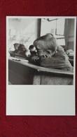 ROBERT DOISNEAU ELEVE 1956 PARIS - Doisneau