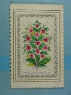 Mignonette Le Souvenir C'est La Vie Fleurs - Botanik