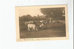 KANDY 30 HAUT DAHOMEY UN TROUPEAU DE BOEUFS - Dahomey