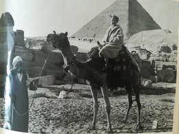 ÉGYPTE GRÈCE ITALIE BELGIQUE 2 ALBUMS AVEC UN TOTAL DE 128 PHOTOS ORIGINALES ET 120 CARTES POSTALES COLLÉES DANS ALBUMS - Album & Collezioni