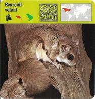 Fiche Illustrée Documentée Ecureuil Volant - Animals