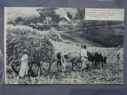 MARTINIQUE CULTURE DE LA CANNE A SUCRE CHARETTE TRANSPORTANT LA CANNE DU CHAMP A LA GARE - Martinique