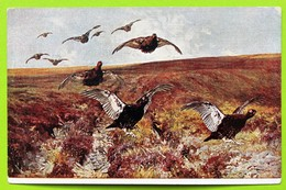 13606 Russia. Hunting. Black Grouses. CPA - Hunting