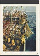 Photographie Pédagogique 1961 / Le Bateau De Pêche Moderne : Le Chalutier / Photo Anita Conti - Reproductions
