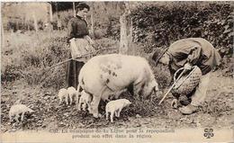 CPA Région Périgord Dordogne Cochon Truffier Pig Truffes Champignon Mushroom Métier Non Circulé - France