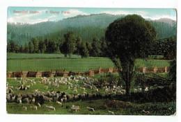 20651  CPA   Beautiful IDAHO  ; A Sheep Farm  ! 1913 ! - Etats-Unis