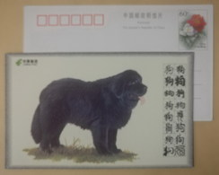 Newfoundland Large Working Dog,China 2008 World Famous Dog Advertising Pre-stamped Card - Dogs