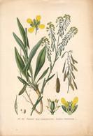 1891 - Botanique - Chromolitographie - Pastel Des Teinturiers - FRANCO DE PORT - Lithographies