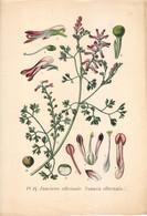 1891 - Botanique - Chromolitographie - Fumeterre Officinale - FRANCO DE PORT - Lithographies