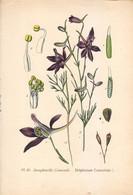 1891 - Botanique - Chromolitographie - Dauphinelle Consoude - FRANCO DE PORT - Lithographies