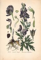 1891 - Botanique - Chromolitographie - Aconit Napel - FRANCO DE PORT - Lithographies