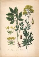 1891 - Botanique - Chromolitographie - Pigamon Jaune - FRANCO DE PORT - Lithographies