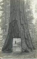 2810. Mariposo - Yosemite