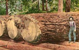 INDUSTRIE DE BOIS(ETATS UNIS) - Trees